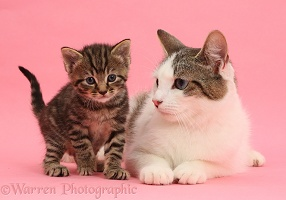 Adorable mother cat and tabby kitten on pink background