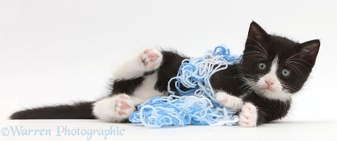 Black-and-white kitten lying with wool