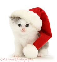 Kitten wearing a Santa hat