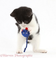 Black-and-white kitten playing with toy mouse