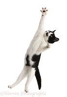 Black-and-white kitten leaping to save a goal