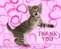 Tabby kitten holding thank you notice
