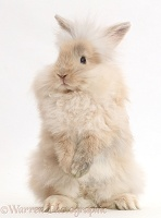 Beige fluffy bunny standing up