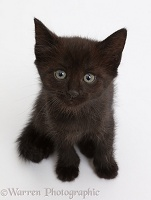 Black kitten sitting and looking up