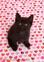 Black kitten sitting on pink heart background