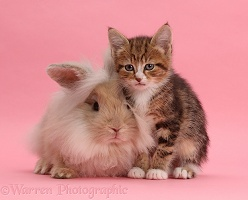 Tabby kitten and fluffy bunny