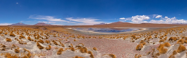 High Altiplano salt lake with tussock grass or Paja Brava