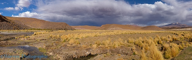 High Altiplano river with tussock grass or Paja Brava