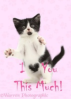 I love you this much Valentine kitten