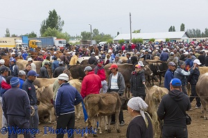 People and cattle at the Karakol Animal Market