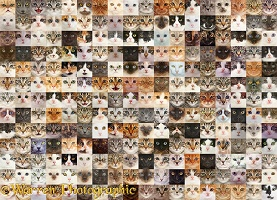 234 Random cats faces