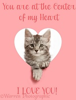 Silver tabby kitten looking through a pink heart