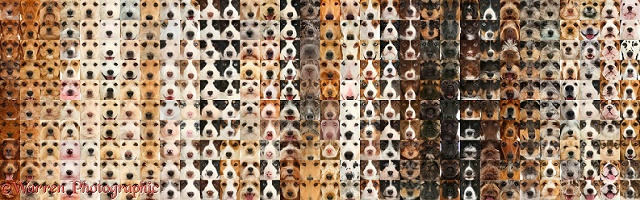 500 dogs, graded through different colours