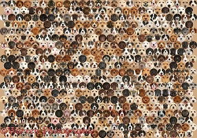 490 dogs of random colours set in a mosaic of circles