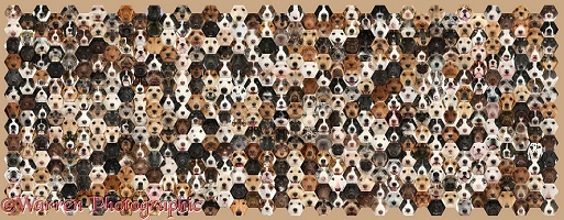 592 dogs of random colours set in a mosaic of hexagons