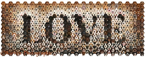 592 love dogs in a mosaic of hexagons