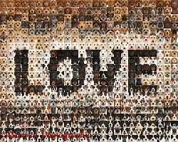 592 love dogs in a mosaic of squares