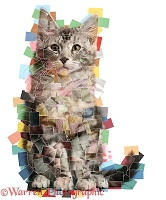 Multiple photo cat mosaic