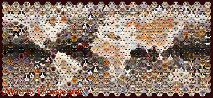 592 Cats of the world map photo mosaic