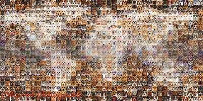800 Cats and Dogs of the world map photo mosaic