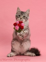 Silver tabby kitten, with a bunch of flowers on pink background