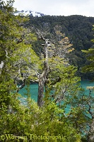 Lake in temperate forest, Los Alerces National Park, Argentina