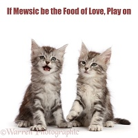 Shakespeare cat - If Mewsic be the Food of Love, Play On