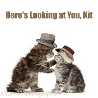Silver Screen Cat Phrase - Here's Looking at You, Kit