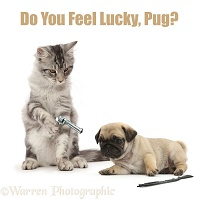 Silver Screen Cat Phrase - Do you feel Lucky, Pug