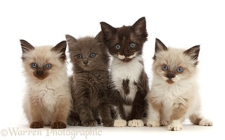 Four assorted kittens, 6 weeks old