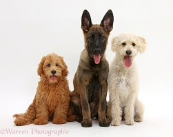 Three assorted Mutts