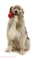 Romanian rescue dog holding red roses