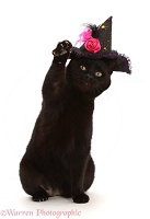 Black witch's cat wearing a hat
