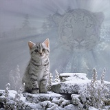 Spirit of the cat - Snow Leopard