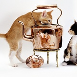 Cats & Copper Kettle