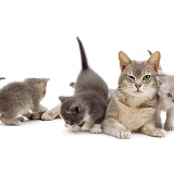 Grey mother cat and kittens 2A