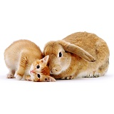 Kitten & Rabbit