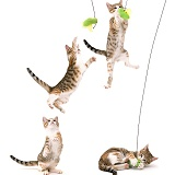 Cat catching a toy multiple image