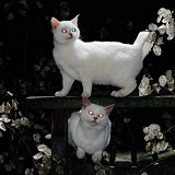 White cats with glowing eyes