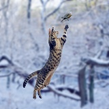 Cat leaping at Robin in snow