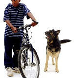 Alsatian with boy and bike