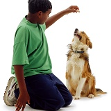 Boy with titbit for a Border Collie