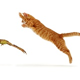 Ginger cat pouncing at a frog