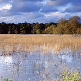 Autumnal grasses in a flooded meadow