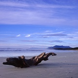 Driftwood on Vancouver Island beach