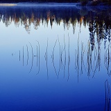 Reeds and their reflections