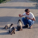 Mark and the Marmots