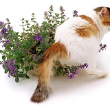 Cat with catmint