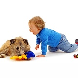 Toddler and terrier with fluffy toy