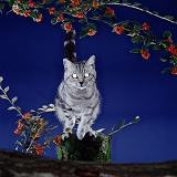 Silver tabby cat with glowing eyes